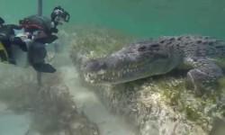 Buzos se encuentran de frente con cocodrilos