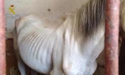 caballo1--575x323