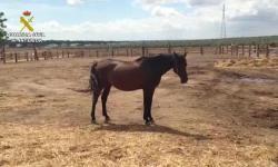 caballo3--575x323