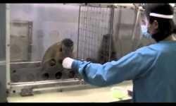 El rechazo frente a la injusticia entre primates nos empuja a cooperar