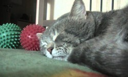 """Gato dormido emite raro sonido para decirle """"salud"""" a su amo"""