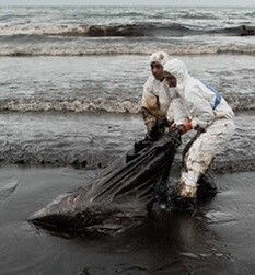 limpieza de petroleo (I)
