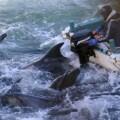 matanaza delfines (P)