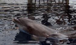 nuevo-delfin-oceanografic