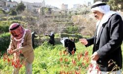 pueblo de Battir whc2014_palestine04 (5)
