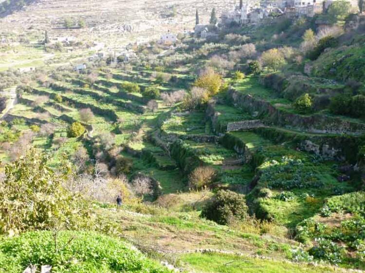 pueblo de Battir whc2014_palestine04 (9)