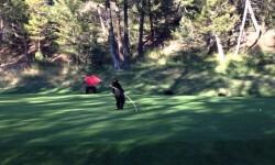Un bebé oso aprovechó que no había nadie cerca del campo de golf para divertirse con una bandera roja.  En el video se aprecia a un pequeño oso que se pone a jugar con una bandera mientras otros de su especie, un tanto más grandes, descansan en lo que parece un campo de golf.  El cachorro parece un artista de circo, pues tiene muchas cualidades para hacer gracias con la bandera.