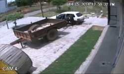 Una cámara de vigilancia registró el momento en que un sujeto se roba una vaca