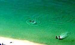 Vídeo: Bañistas escapan de un tiburón martillo