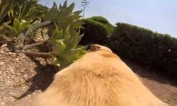 Vídeo: cómo observa la vida un perro