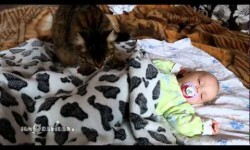 """Vídeo: Gata hace dormir con """"mimos"""" a un bebé"""