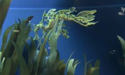 Vídeos de algunas especies que varios pensarían solo existen en películas de ciencia ficción.