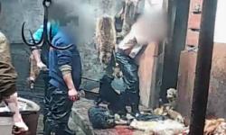 China  escalofriante matanza de perros para hacer guantes   Videos  Maltrato animal  China  Animales   América