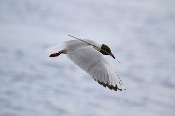 Espana-posee-la-mayor-superficie-marina-protegida-para-las-aves_image_380
