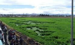 Extranas figuras en el campo de cultivo. (Foto-Agencias)