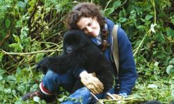 Gorilas-en-la-niebla_image_380