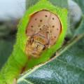 La-mayoria-de-los-insectos-herbivoros-se-especializa-en-un-unico-vegetal_image_380 (1)
