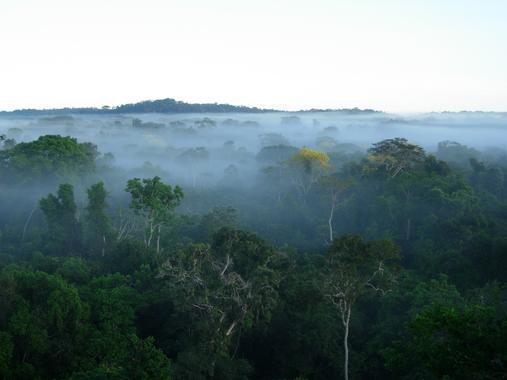 Las-selvas-tropicales-fragmentadas-pierden-diversidad_image_380