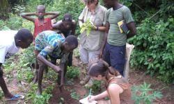 Los-esclavos-africanos-llevaron-al-Nuevo-Mundo-sus-conocimientos-de-botanica_image_380