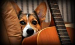 Los-perros-distinguen-los-diferentes-componentes-del-habla-humana_image_380