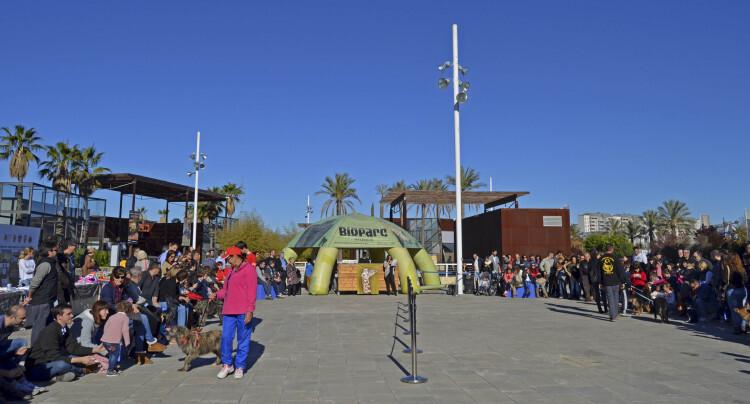 Plaza de Bioparc Valencia - 5 desfile solidario de perros AUPA