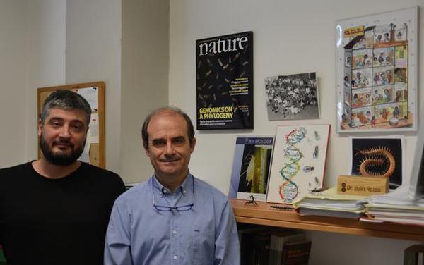 Secuenciado-el-genoma-del-ciempies_image_380_imagelarge