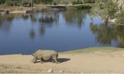 Solo-quedan-cinco-rinocerontes-blancos-del-norte-en-el-mundo_image648_365