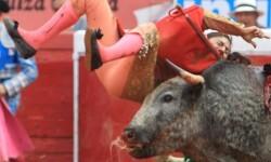 Toroembravecido hirió de dos cornadas a torera mexicana y a cuatro de sus ayudantes (1)