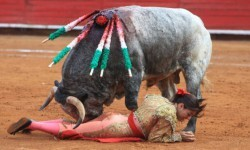 Toroembravecido hirió de dos cornadas a torera mexicana y a cuatro de sus ayudantes (6)
