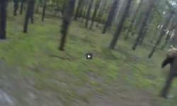 Video  ciclista huye aterrorizado de la persecución de un oso   Videos  Canadá  Animales salvajes   América