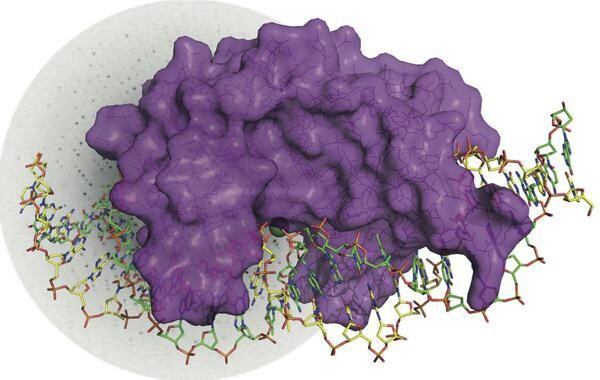 Visualizan-por-primera-vez-como-se-rompe-la-doble-helice-de-ADN_image_380_imagelarge