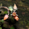 Descubren-una-nueva-especie-de-planta-en-el-volcan-Colima-de-Mexico_image_380