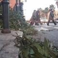 El fuerte viento está provocando que restos de basura y ramas se acumulen por las calles.