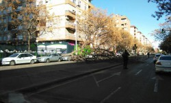 El viento deja destrozos en Valencia y un fallecido en Benimàmet (2)