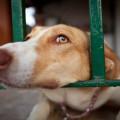 La-dificil-hazana-de-salir-vivo-de-la-perrera_image_380