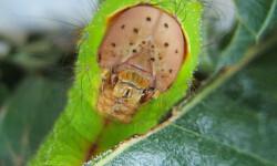 La-mayoria-de-los-insectos-herbivoros-se-especializa-en-un-unico-vegetal_image_380