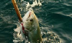 La-pesca-recreativa-en-el-Mediterraneo-es-mas-danina-de-lo-que-se-pensaba_image_380