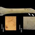 Los-humanos-de-Atapuerca-comian-perro-gato-zorro-y-tejon_image_380