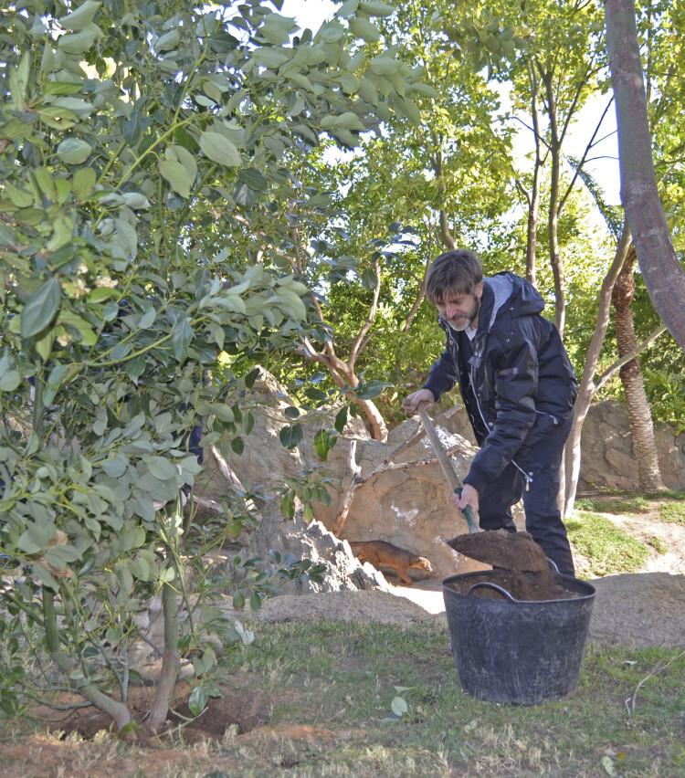 Paco Roca plantando un Cinamomo - conmemoración Día del Árbol en Bioparc Valencia
