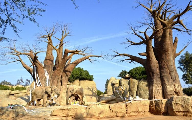 REYES MAGOS 2015 - elefantes en el bosque de baobabs - BIOPARC VALENCIA
