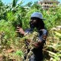 Un rastafari cuida sus plantas de marihuana. (Foto-AP)