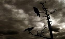 Una pareja de cuervos en la sabána africana. (Foto-Agencias)