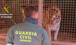 foto tigre.