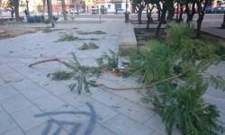 viento rama arbol caida