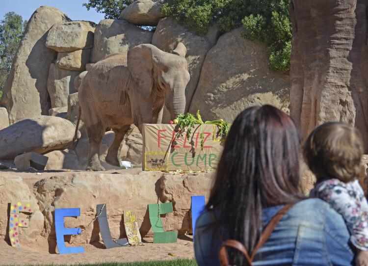 7º aniversario BIOPARC Valencia - visitantes observando a los elefantes
