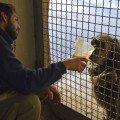 Cuidador de primate dando un caldito caliente a un chimpancé desde la instalación interior - Bioparc Valencia