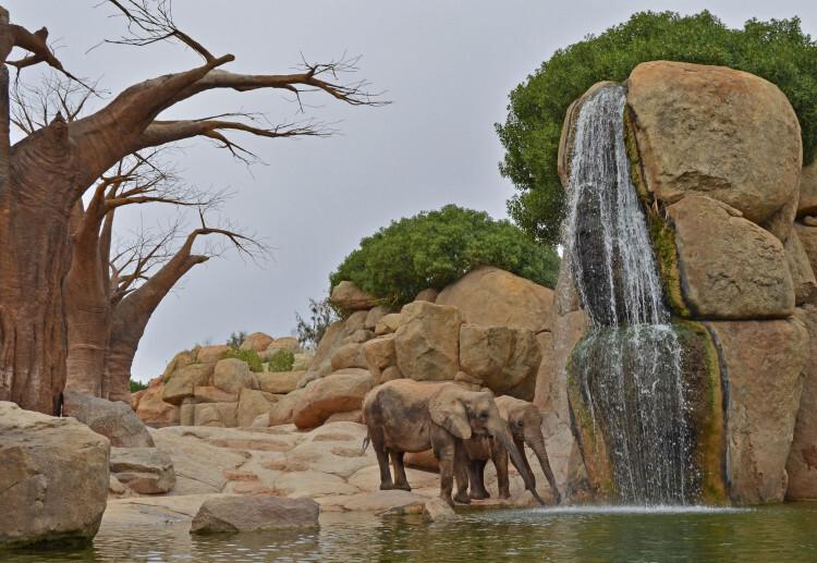 Elefantes junto al lago de la Sabana - Bioparc Valencia - experiencias Bioparc