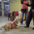 Fundación Affinity lleva las terapias con animales a los centros de menores tutelados (4)