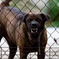 Nueva normativa sobre la tenencia de animales potencialmente peligrosos