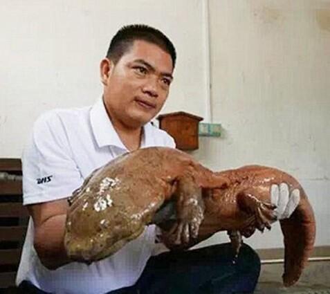 El señor Xiao fue quien encontró al ejemplar del animal jurásico. (Foto-Agencias)